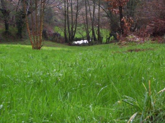 Hierba cerca de Amanita muscaria