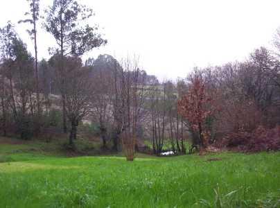 Otra ruta a Amanita muscaria