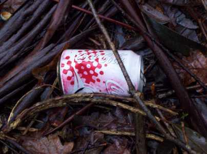 lata cerca de Amanita muscaria