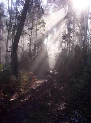 rayos de luz Amanita muscaria