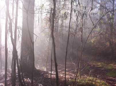 rayos de sol Amanita muscaria