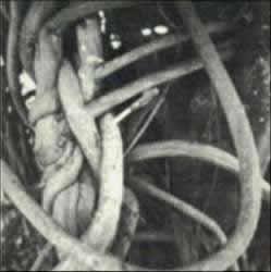 """Lianas de Banisteriopsis caapi con las que se prepara la bebida ritual llamada """"ayahuasca"""""""