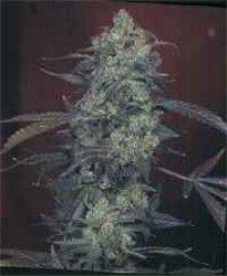 Marihuana: Un post distinto